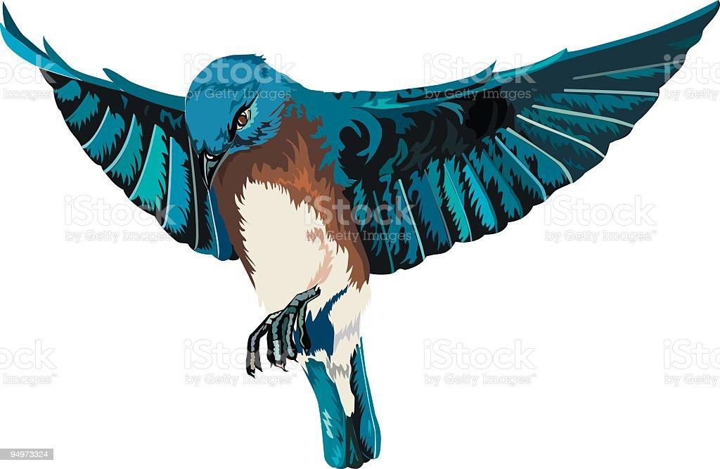 Bluebird with Full Open Wings In Flight Illustration on White royalty-free stock vector art