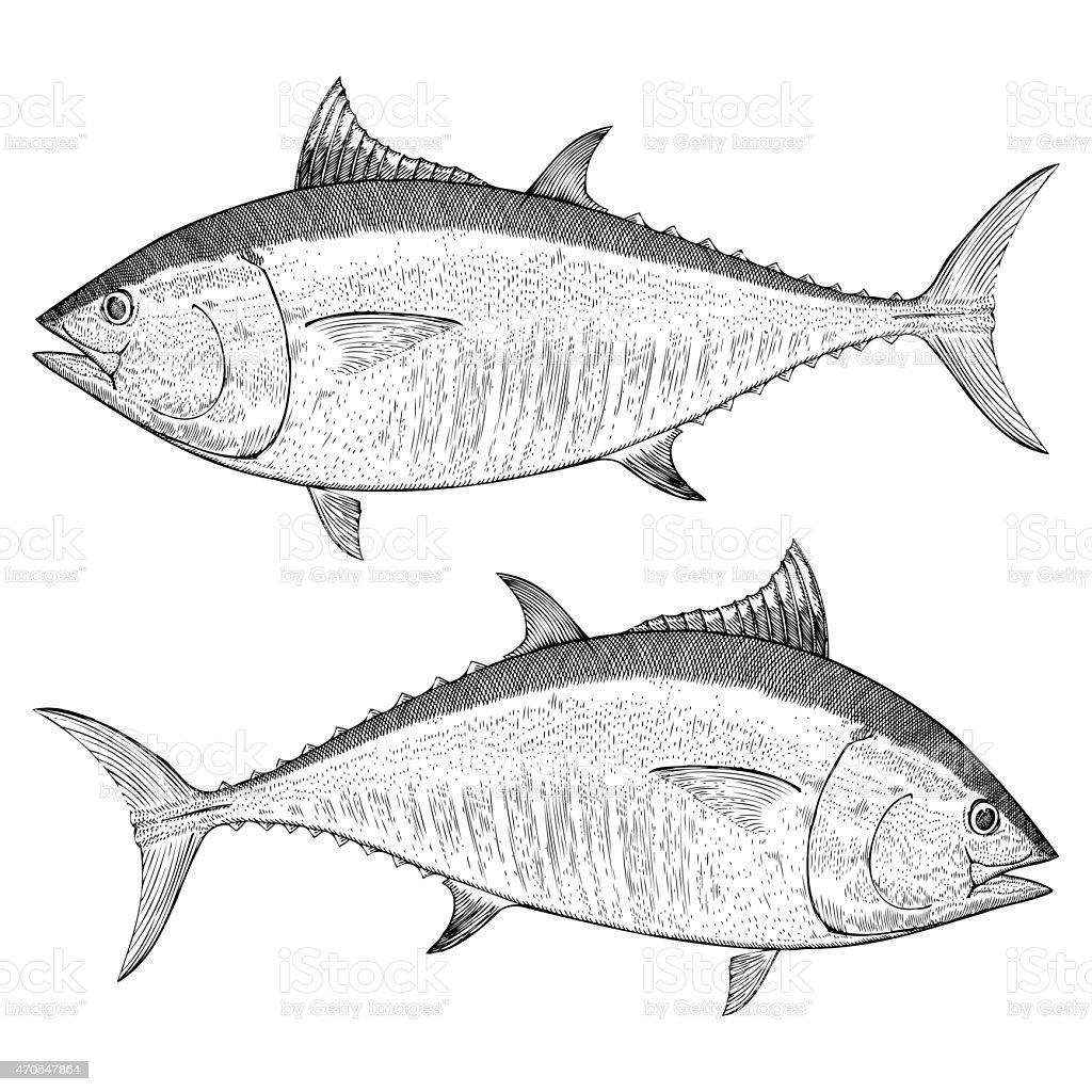 BlueFin Tuna Illustration vector art illustration