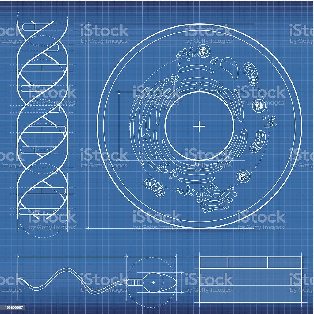 Blueprint, biology vector art illustration