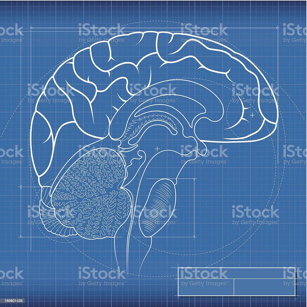 Blueprint, brain royalty-free stock vector art