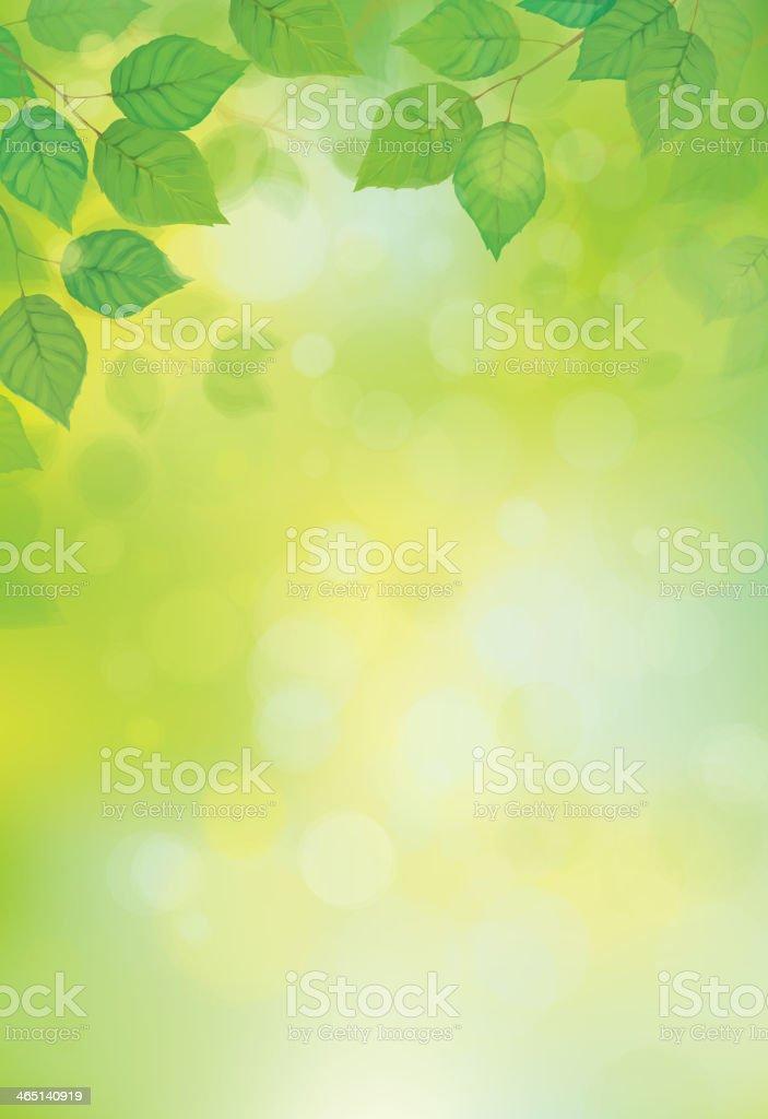 Blurred sunshine background with vector green leaves vector art illustration