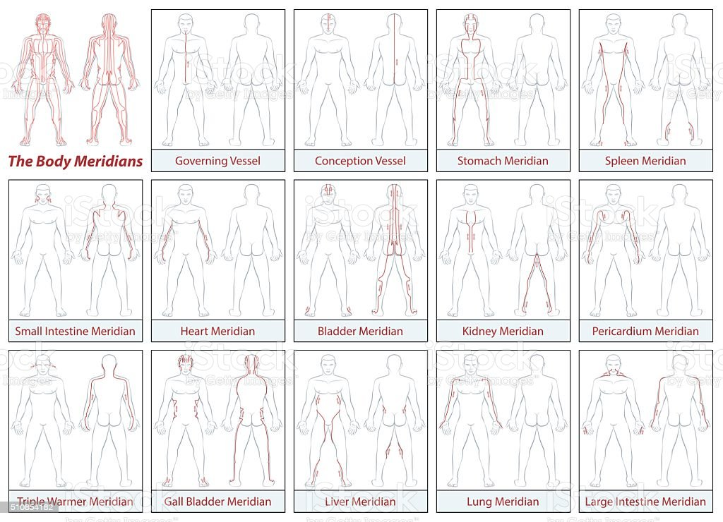 Body Meridians Schematic Diagram Flow Direction vector art illustration