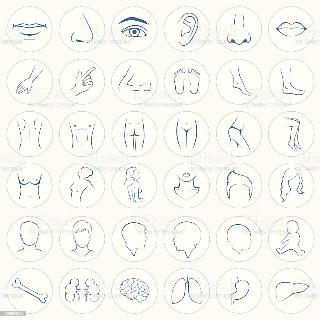 body parts, five senses vector art illustration