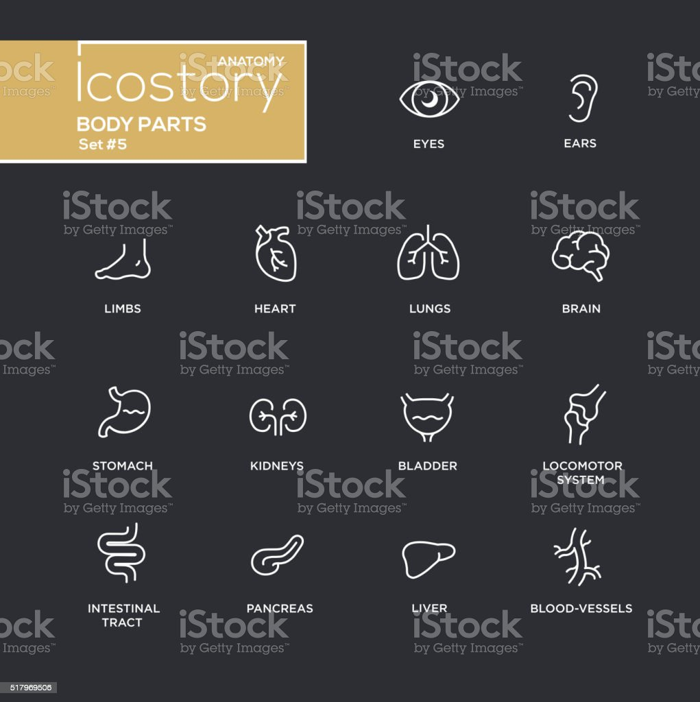 Body parts modern simple thin line design icons, pictograms set vector art illustration