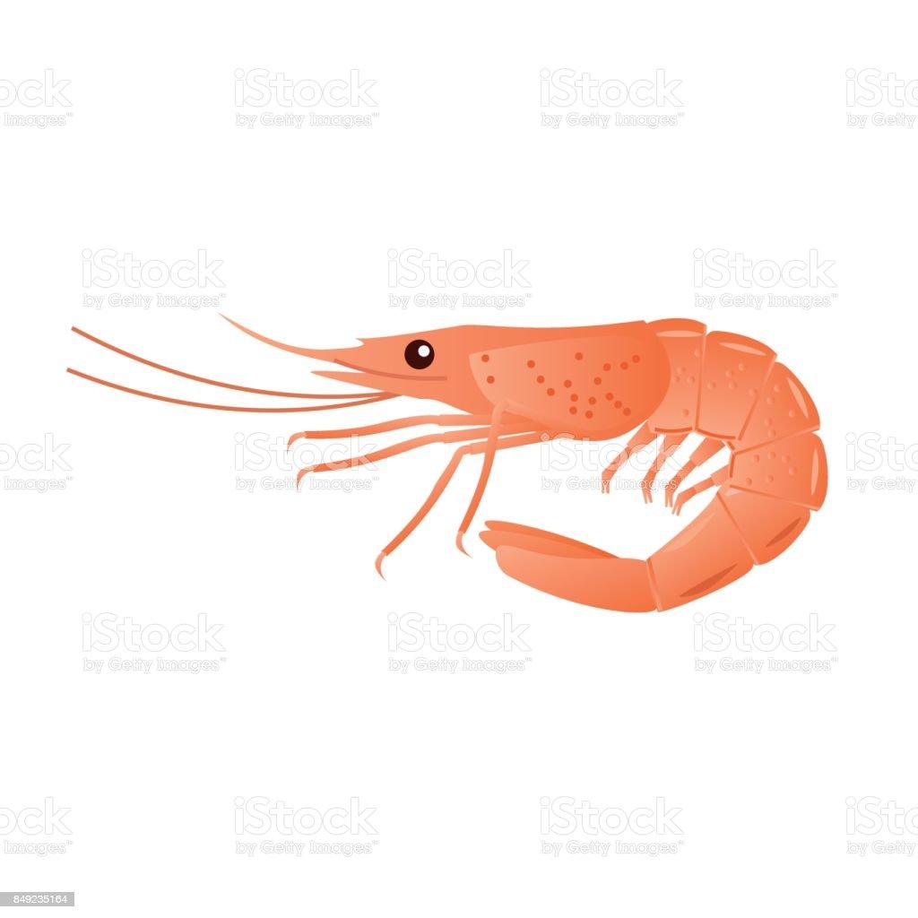 Boiled shrimp vector vector art illustration