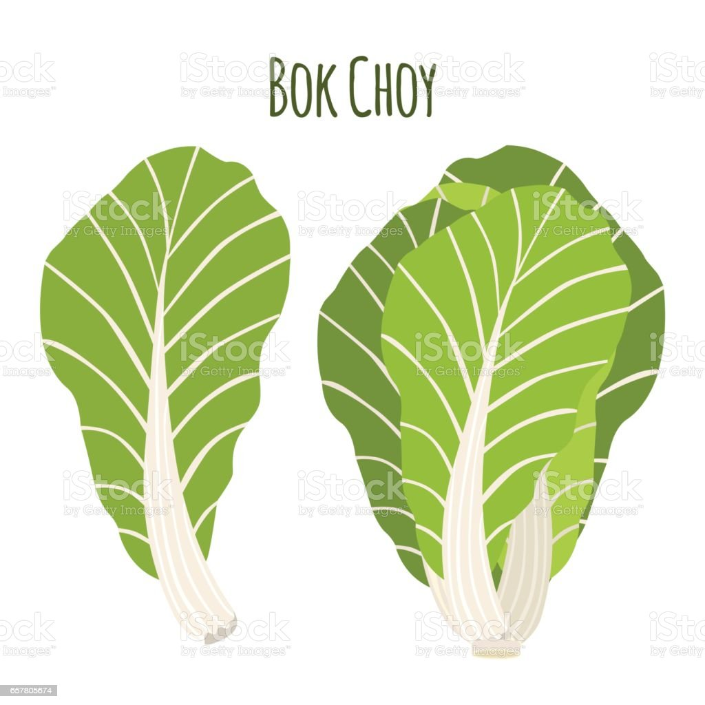 Bok choy, chinese cabbage in cartoon flat style. vector art illustration