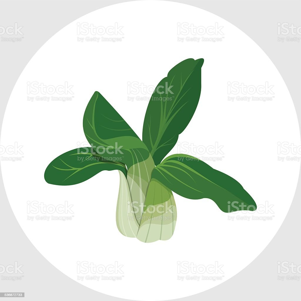 Bok Choy - Chinese Cabbage vector art illustration