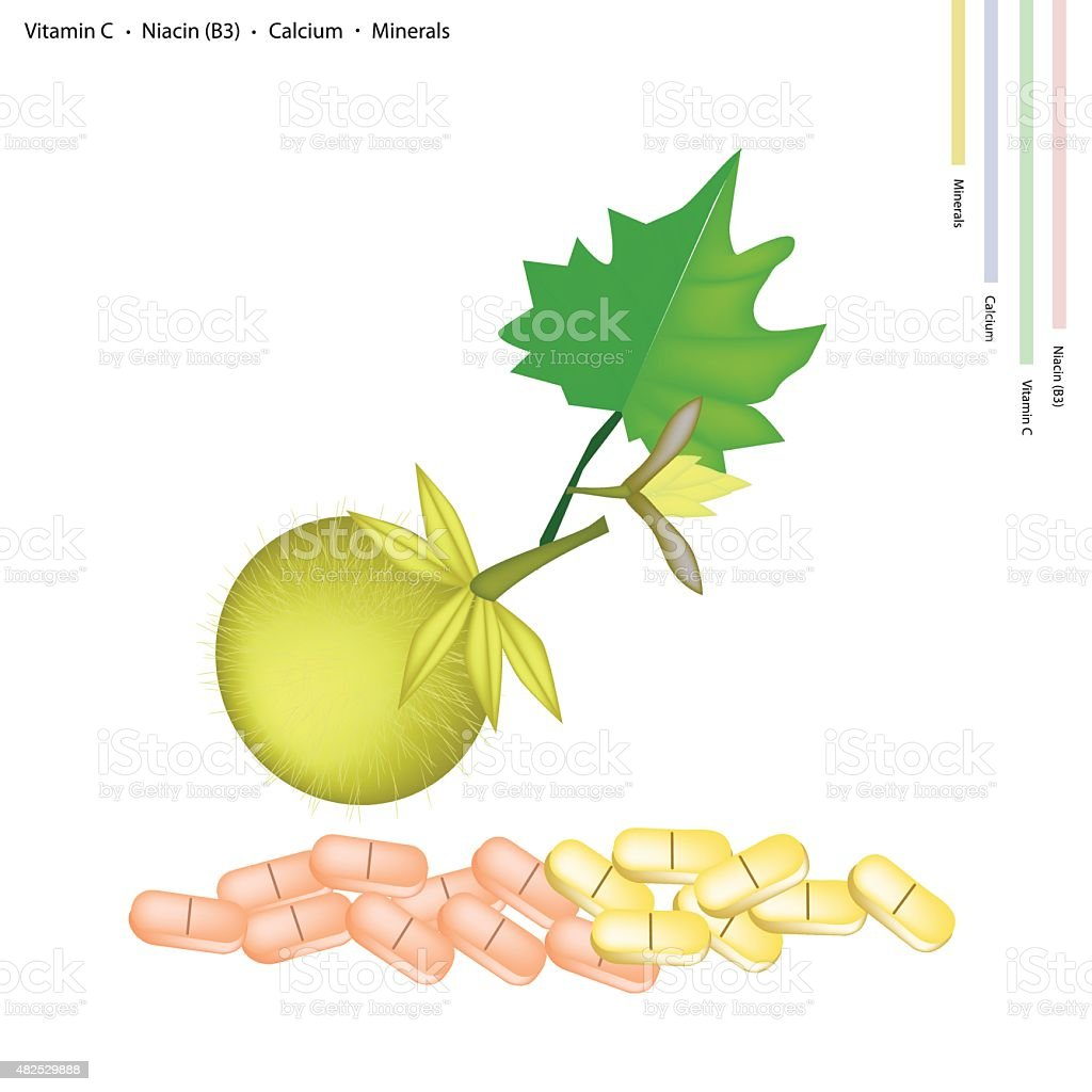 Bolo Maka Fruits with Vitamin C, B3 and Calcium vector art illustration