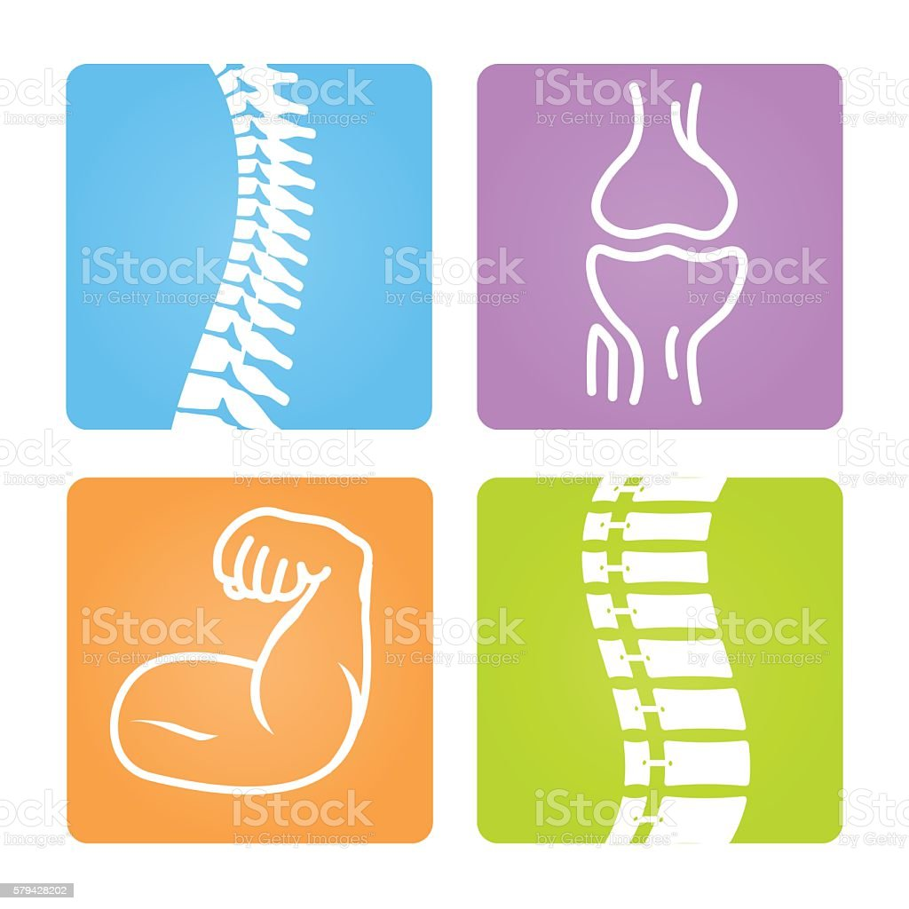 Bone and Muscle Icon Set vector art illustration