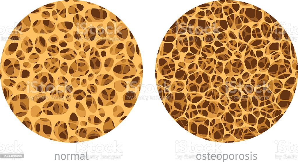 Bone spongy structure vector art illustration