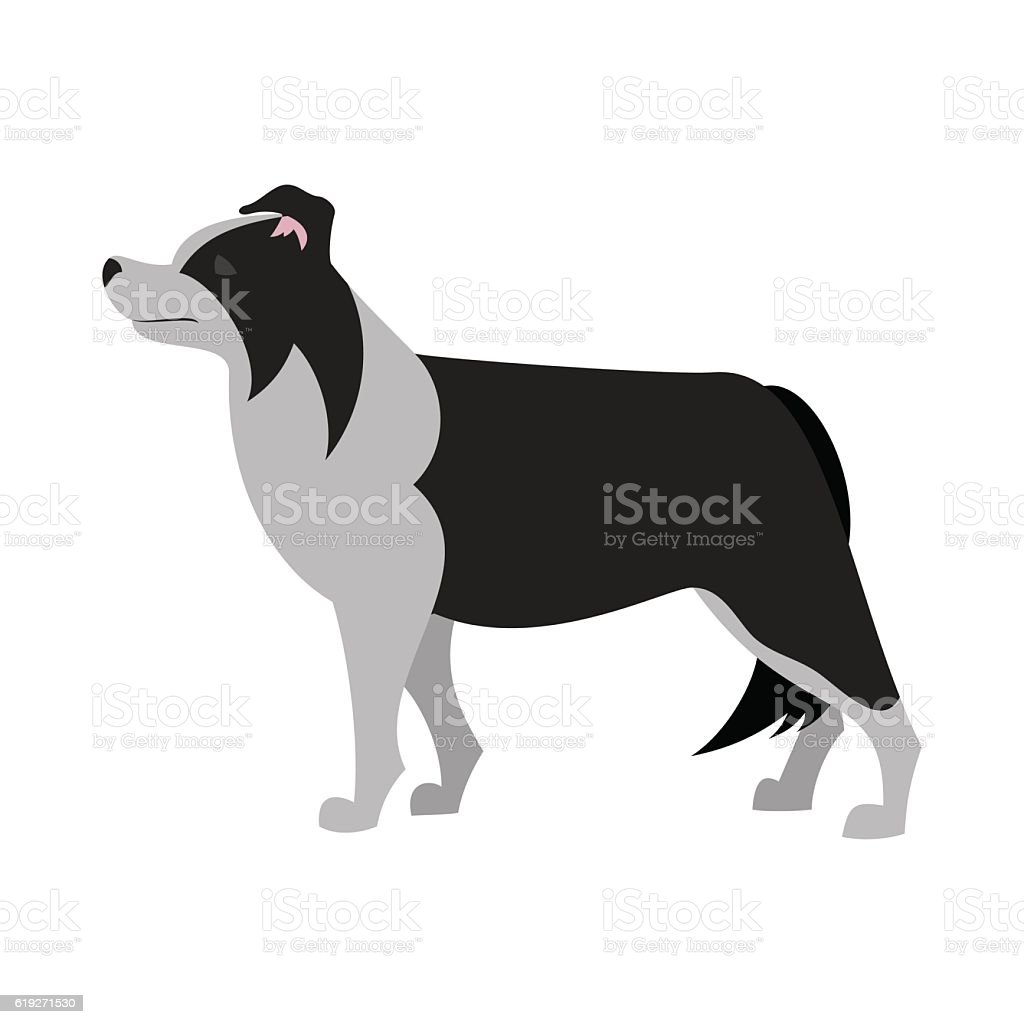 Border collie design vector art illustration