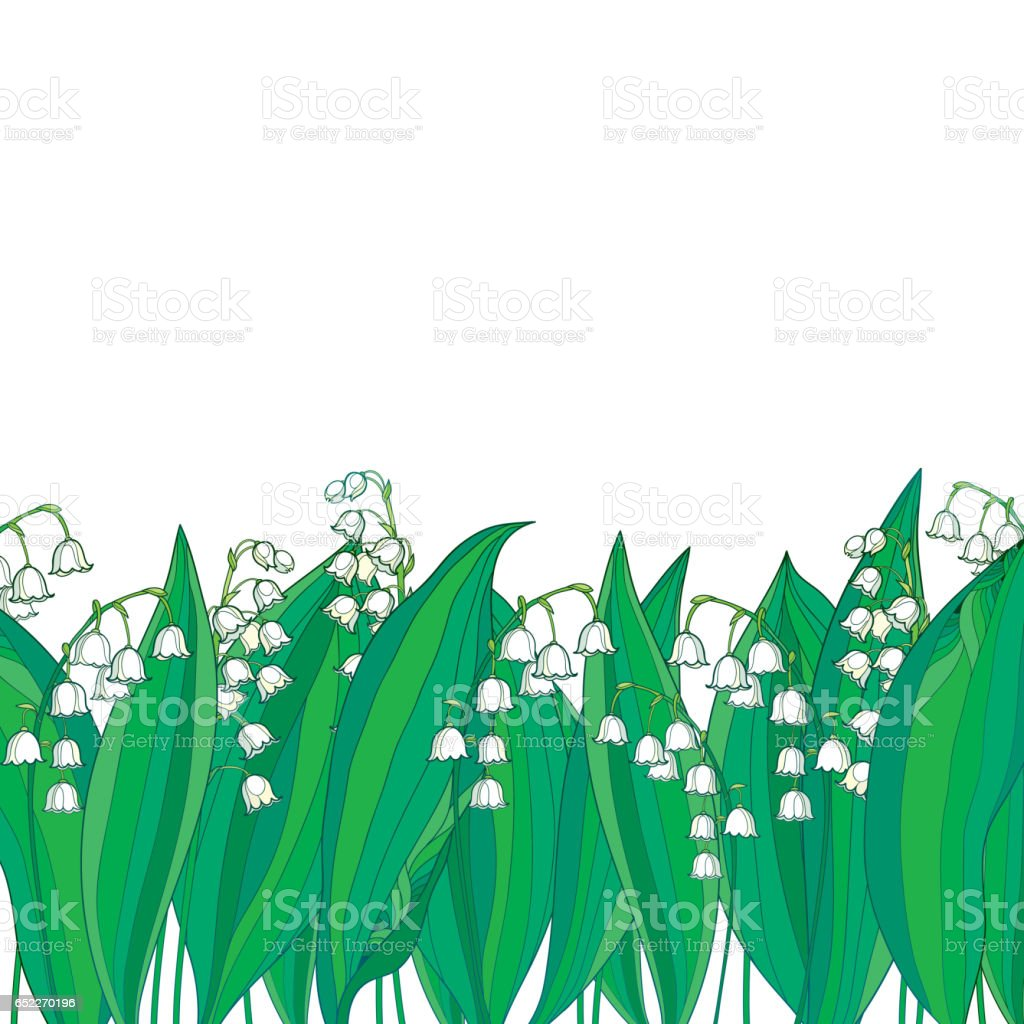 Border with white Lily of the valley or Convallaria and green leaves isolated. vector art illustration