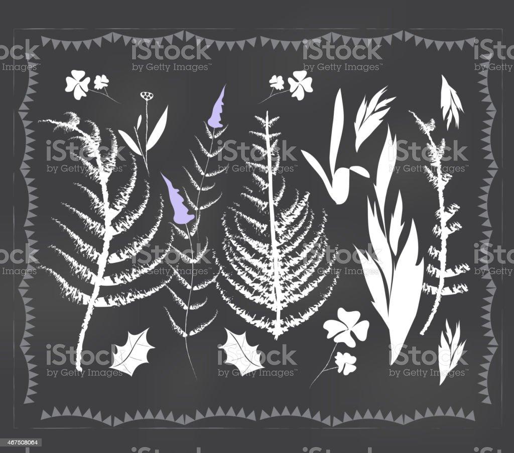 Botanical elements vector art illustration