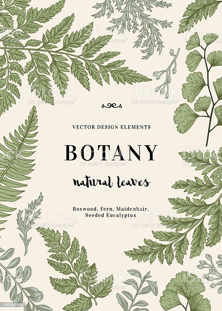 Botanical illustration with leaves. vector art illustration