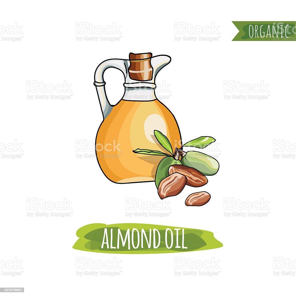 Bottle of  Almond Oil and almond. Organics. vector art illustration
