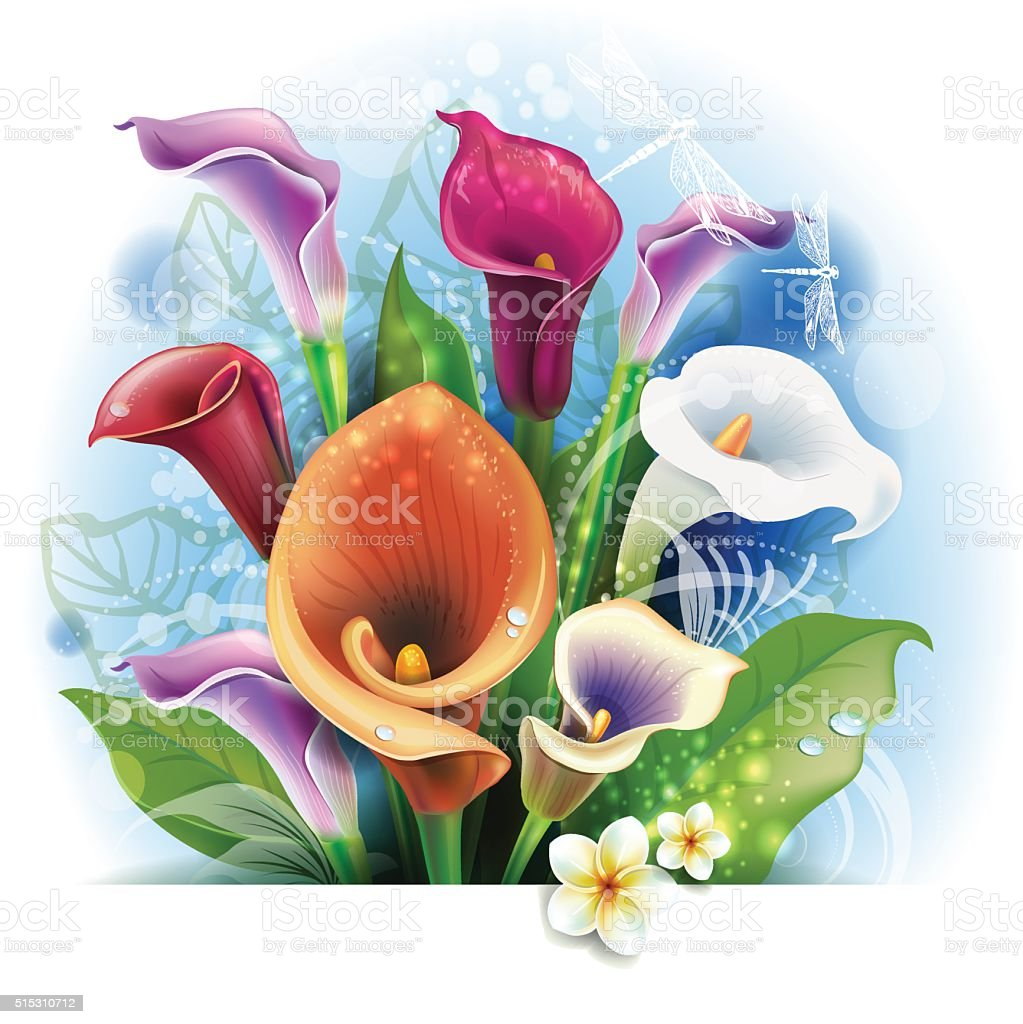 Bouquet of Calla lilies vector art illustration