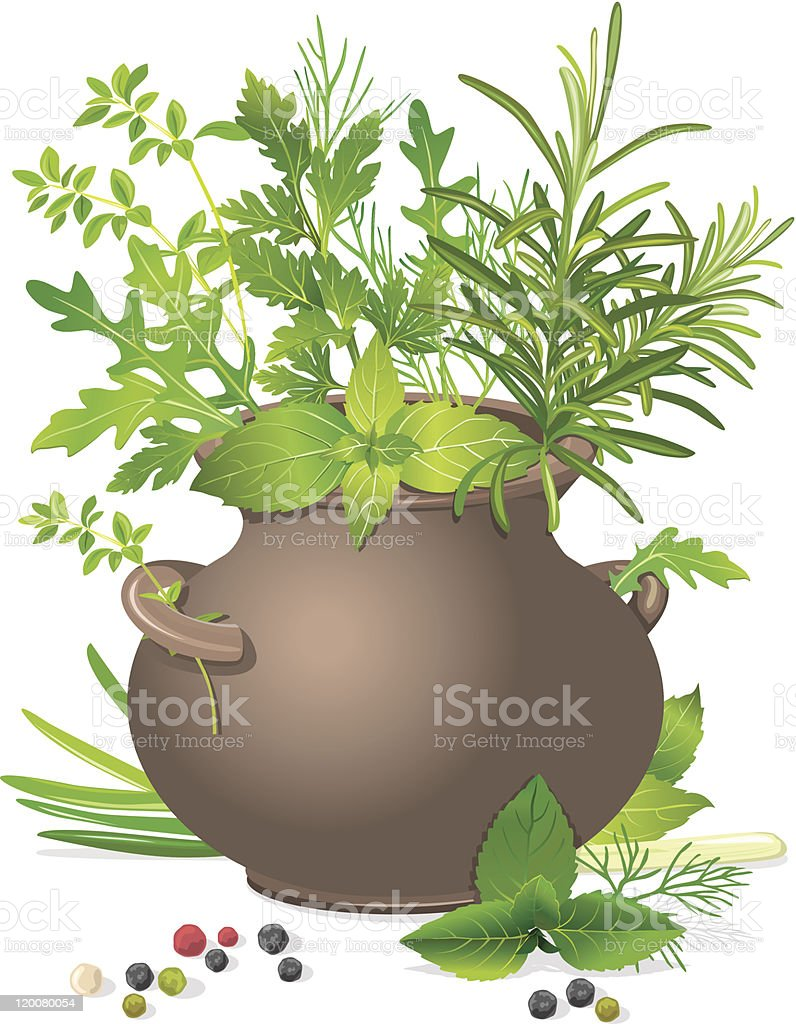 Bouquet of fresh herbs royalty-free stock vector art