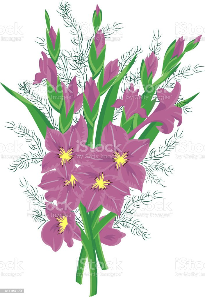 Bouquet of lilac gladioluses vector art illustration