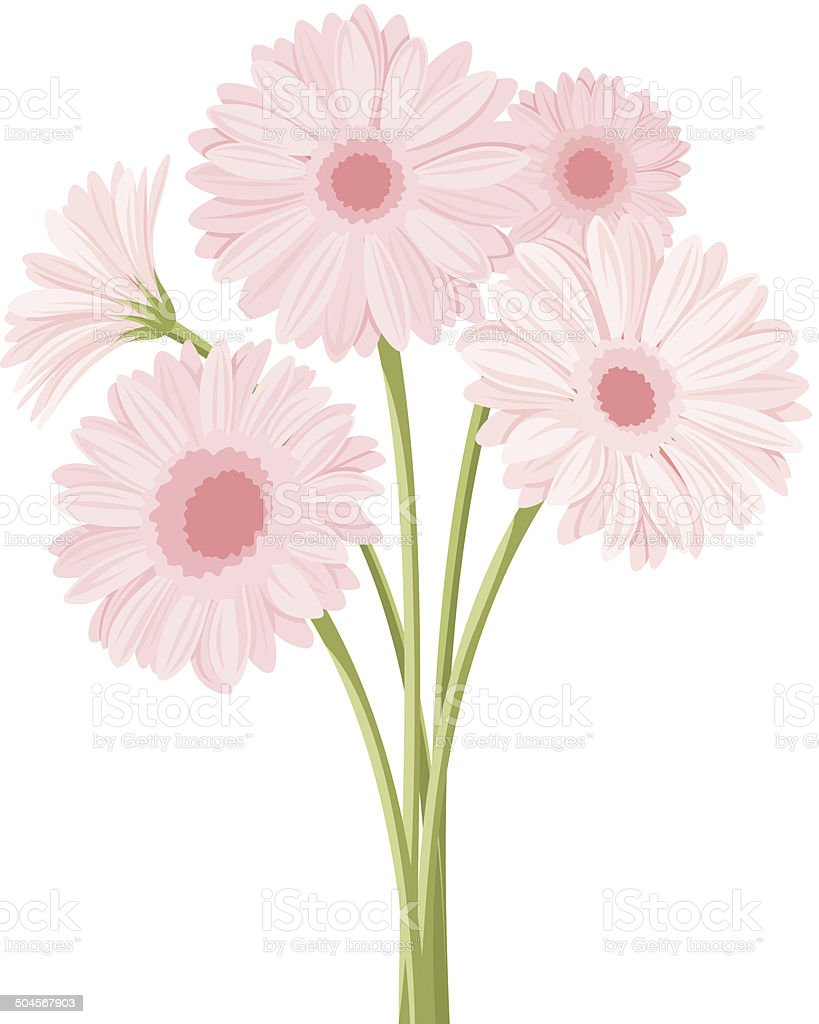 Bouquet of pink gerbera flowers. Vector illustration. royalty-free stock vector art
