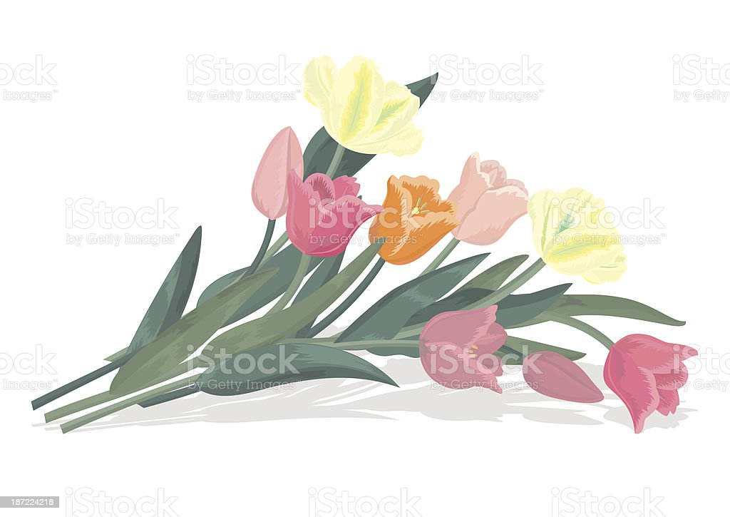 Bouquet of tulips royalty-free stock vector art