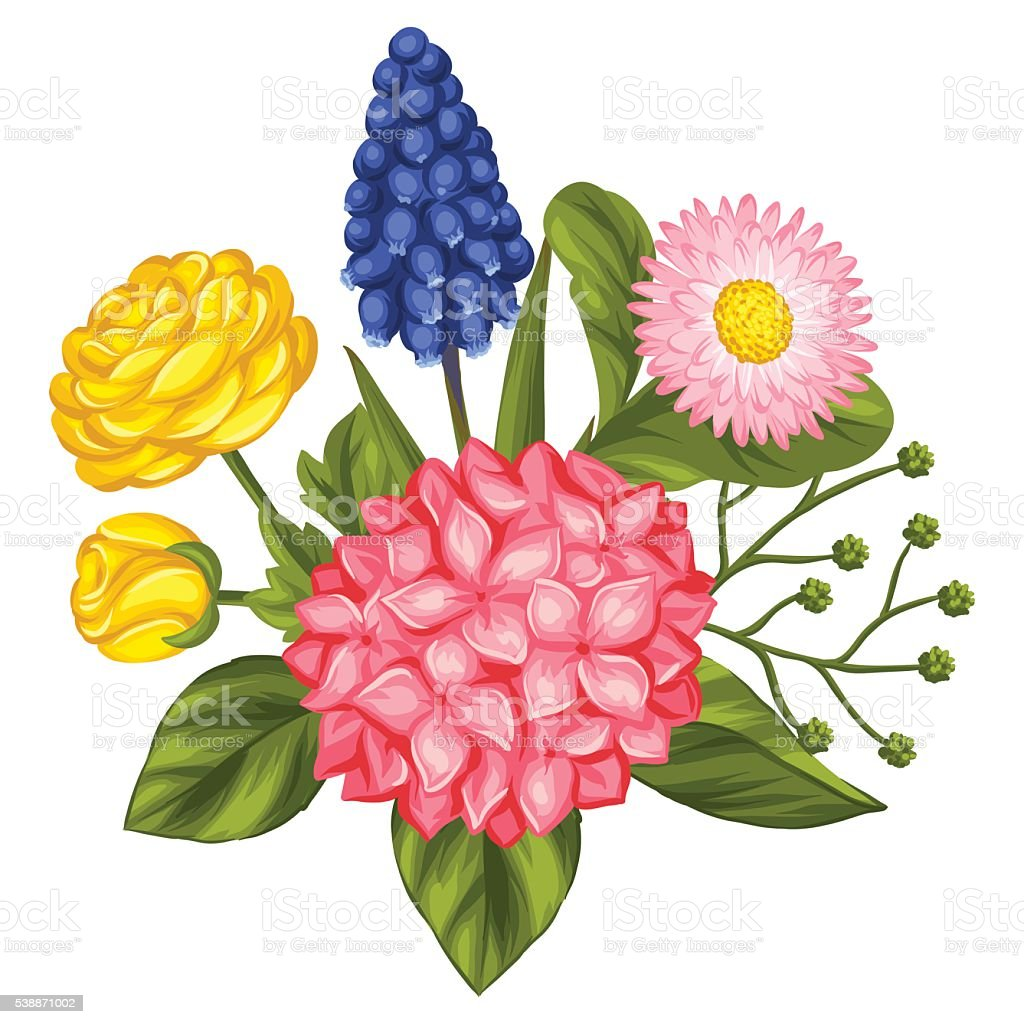 Bouquet with garden flowers. Decorative hortense, ranunculus, muscari and marguerite vector art illustration