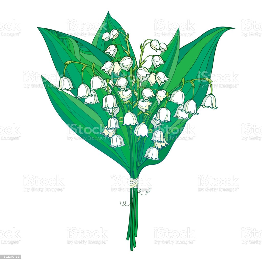 Bouquet with Lily of the valley or Convallaria isolated on white. vector art illustration