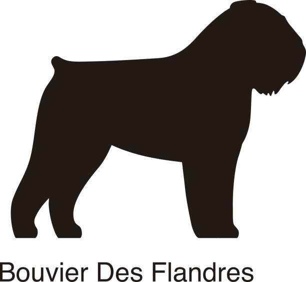 Bouvier Des Flandres Clip Art, Vector Images & Illustrations