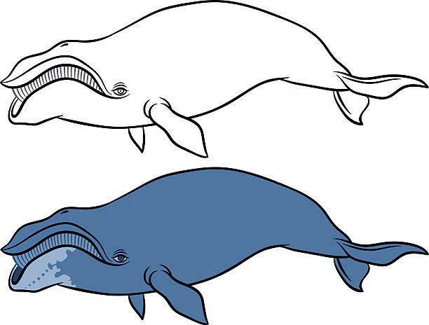 whale stencil free stencil gallery