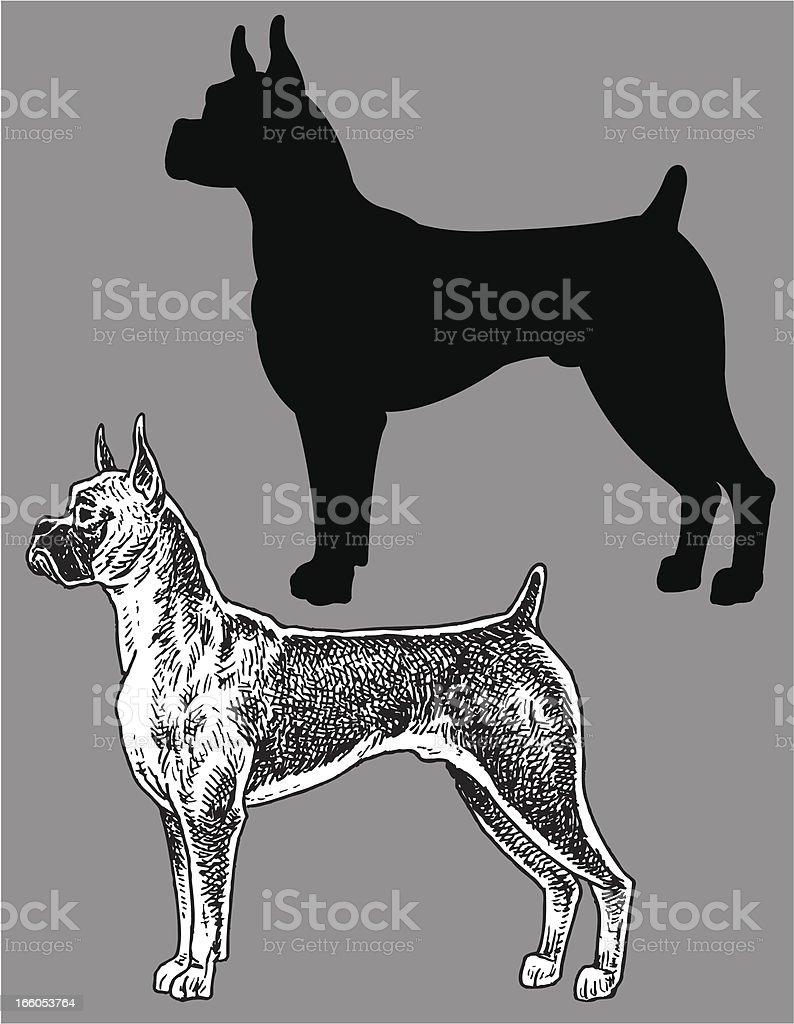 Boxer - Dog, domestic pet royalty-free stock vector art