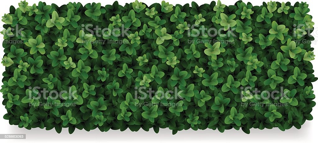 boxwood decorative fence vector art illustration
