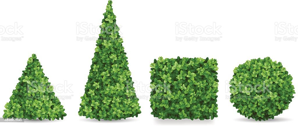 Boxwood shrubs of different topiary forms vector art illustration