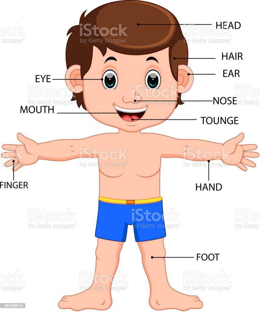 Boy Body Parts Diagram Poster Stock Vector Art 663966840