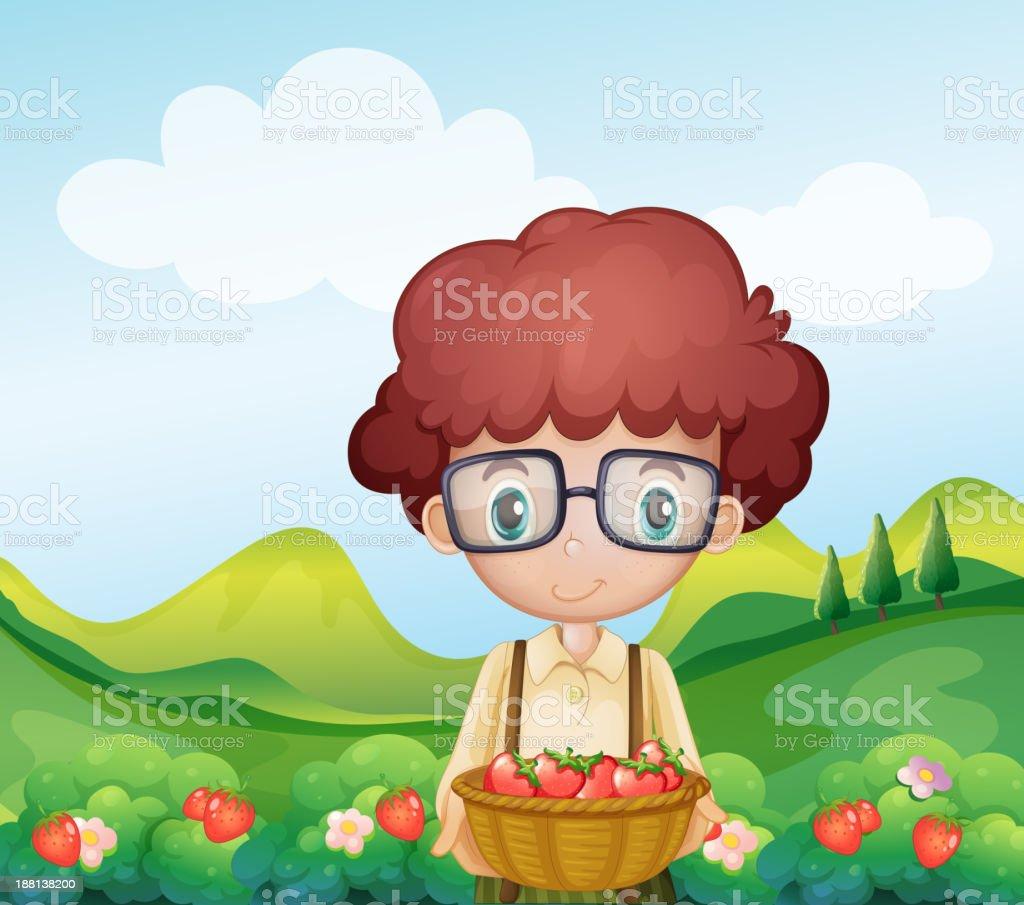 boy harvesting strawberries royalty-free stock vector art