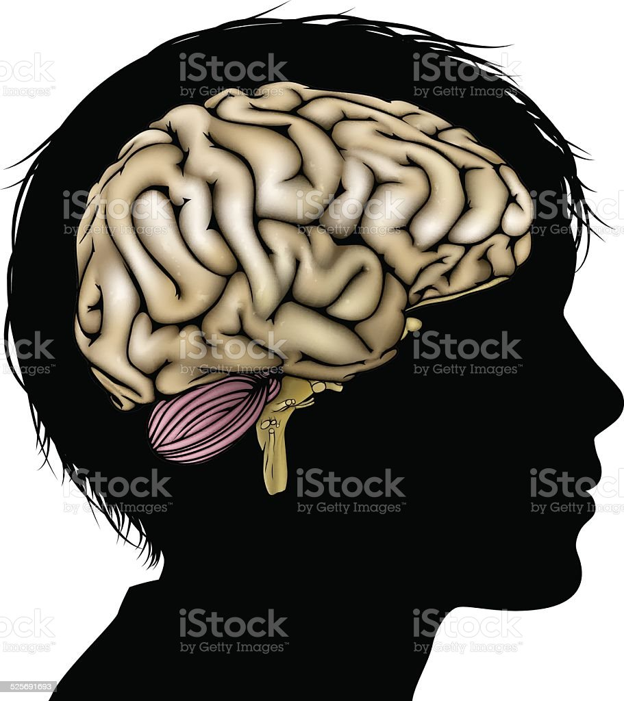 Brain development concept vector art illustration