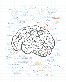 Brain drawing on the paper