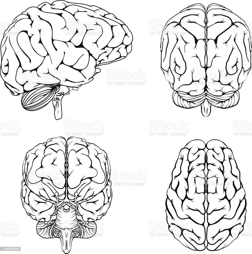 Brain from top side front and back vector art illustration