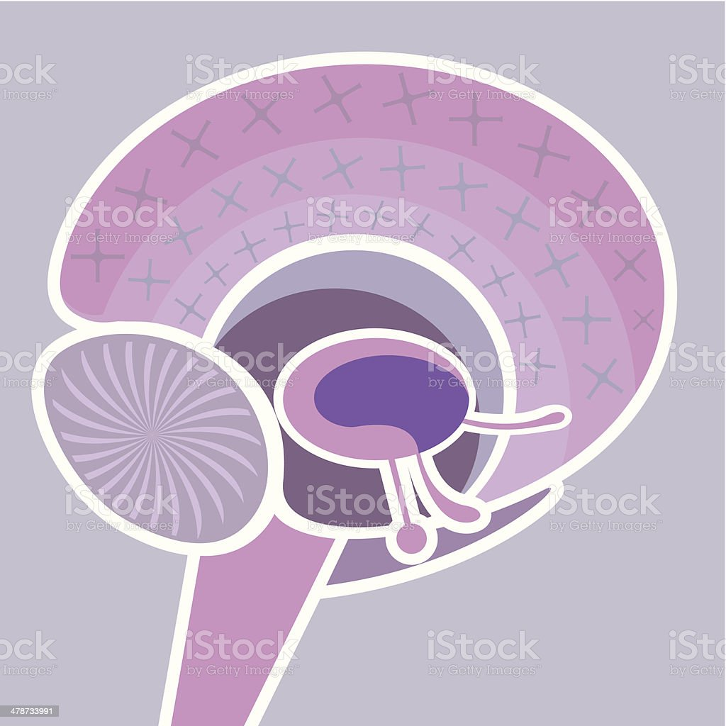 Brain Nervous System vector royalty-free stock vector art