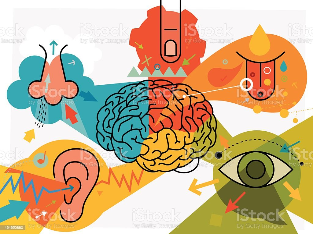 Brain Parts And Sensory Perception vector art illustration