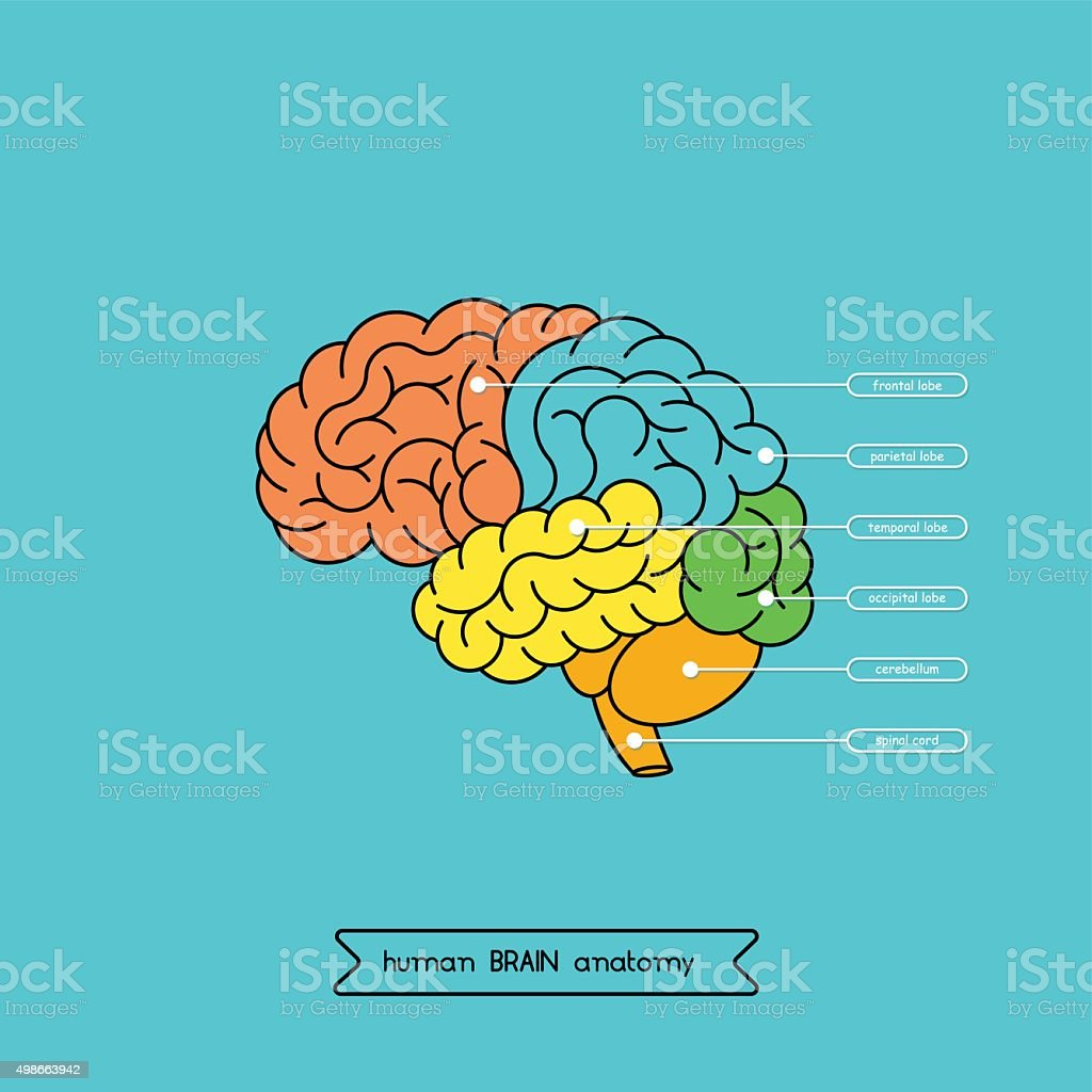 Brain side 1 vector art illustration