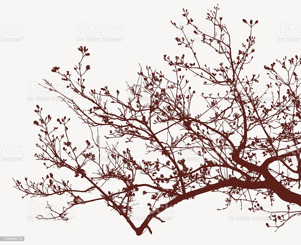 branch of a blooming tree vector art illustration