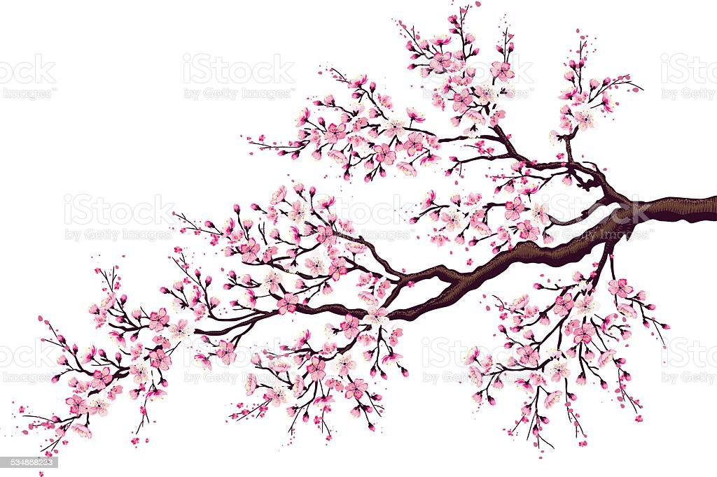 Branch of a blossoming cherry vector art illustration
