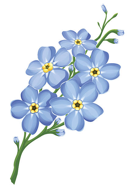 clip art forget me not flower - photo #2