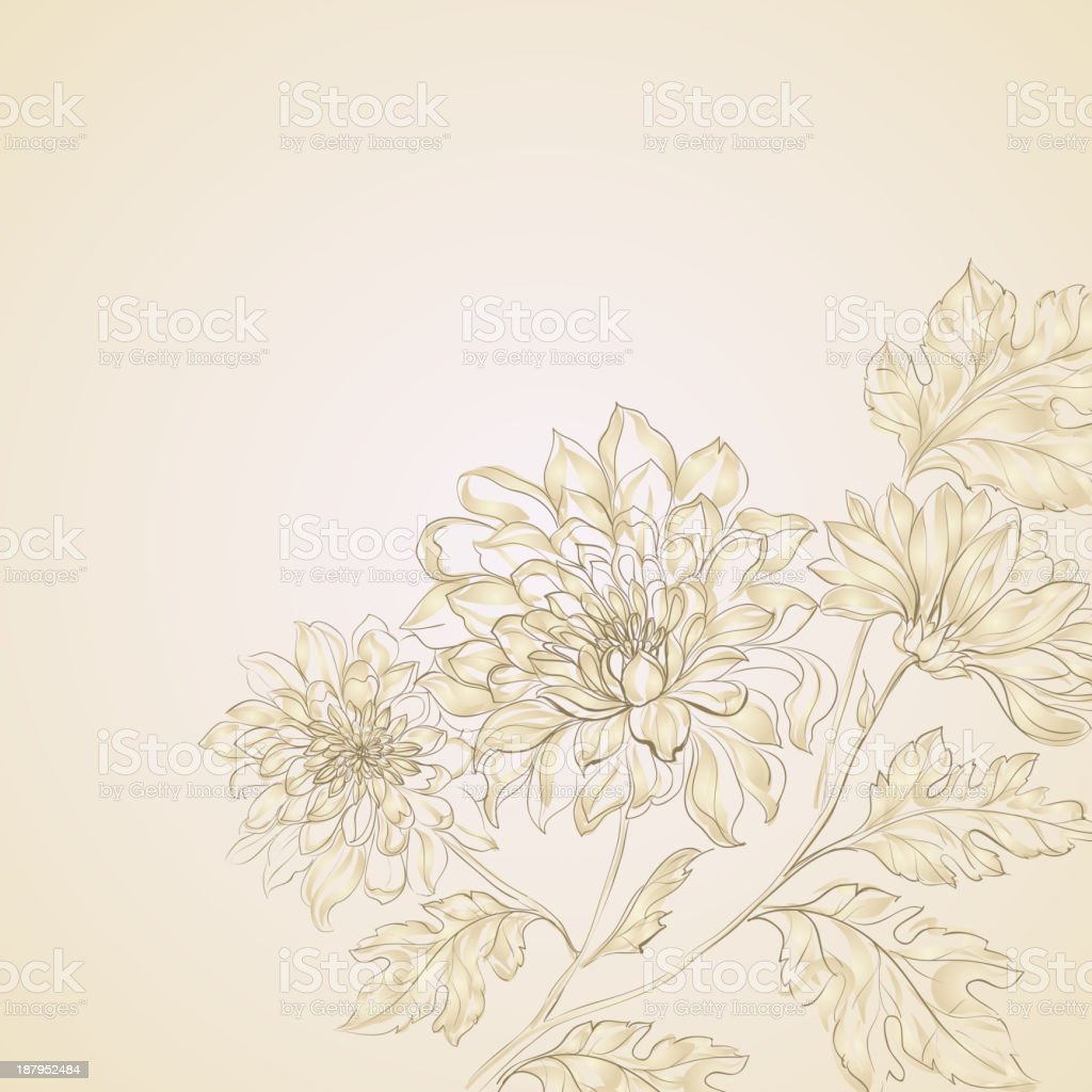Branch of Chrysanthemum royalty-free stock vector art