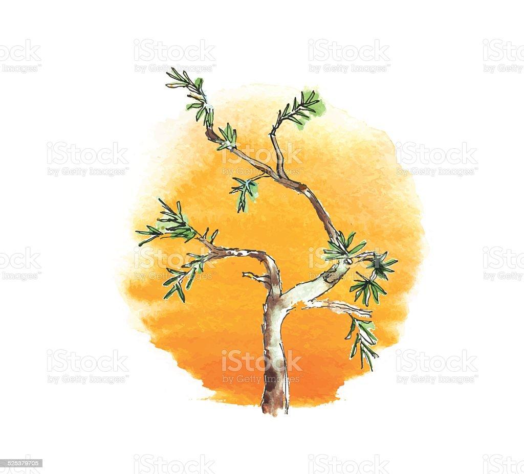 Branch of juniper tree against the sun, vector vector art illustration