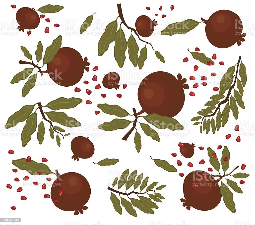 Branch of Pomegranate With Fruit vector art illustration