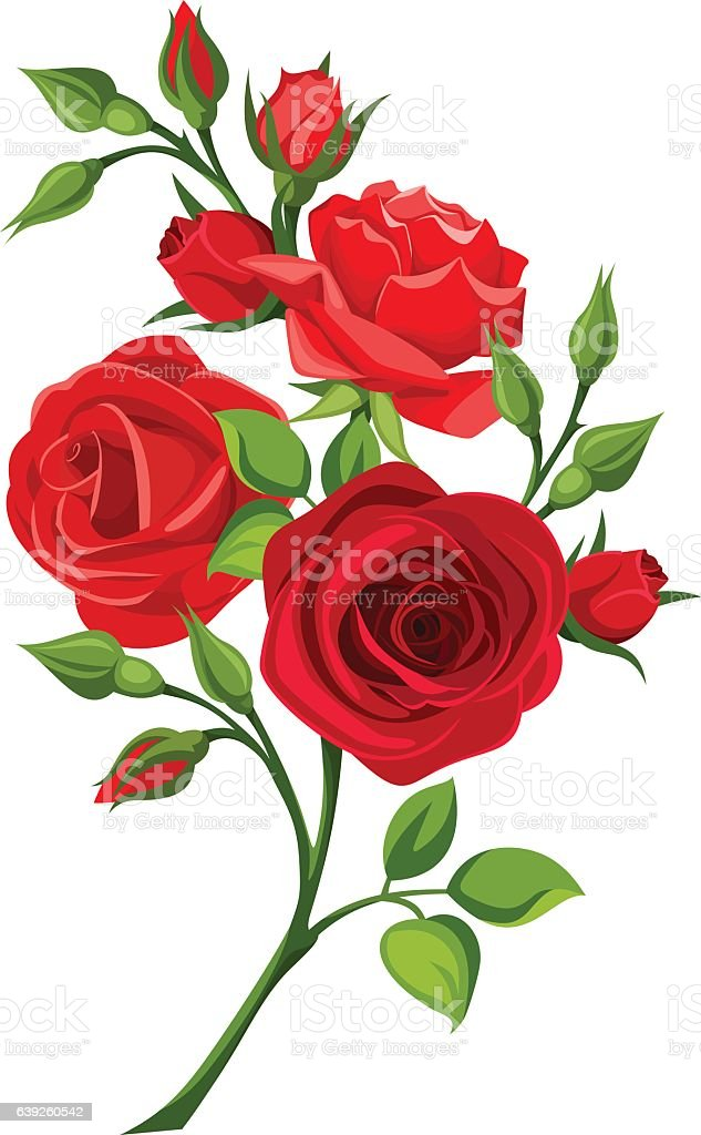 Branch of red roses. Vector illustration. vector art illustration