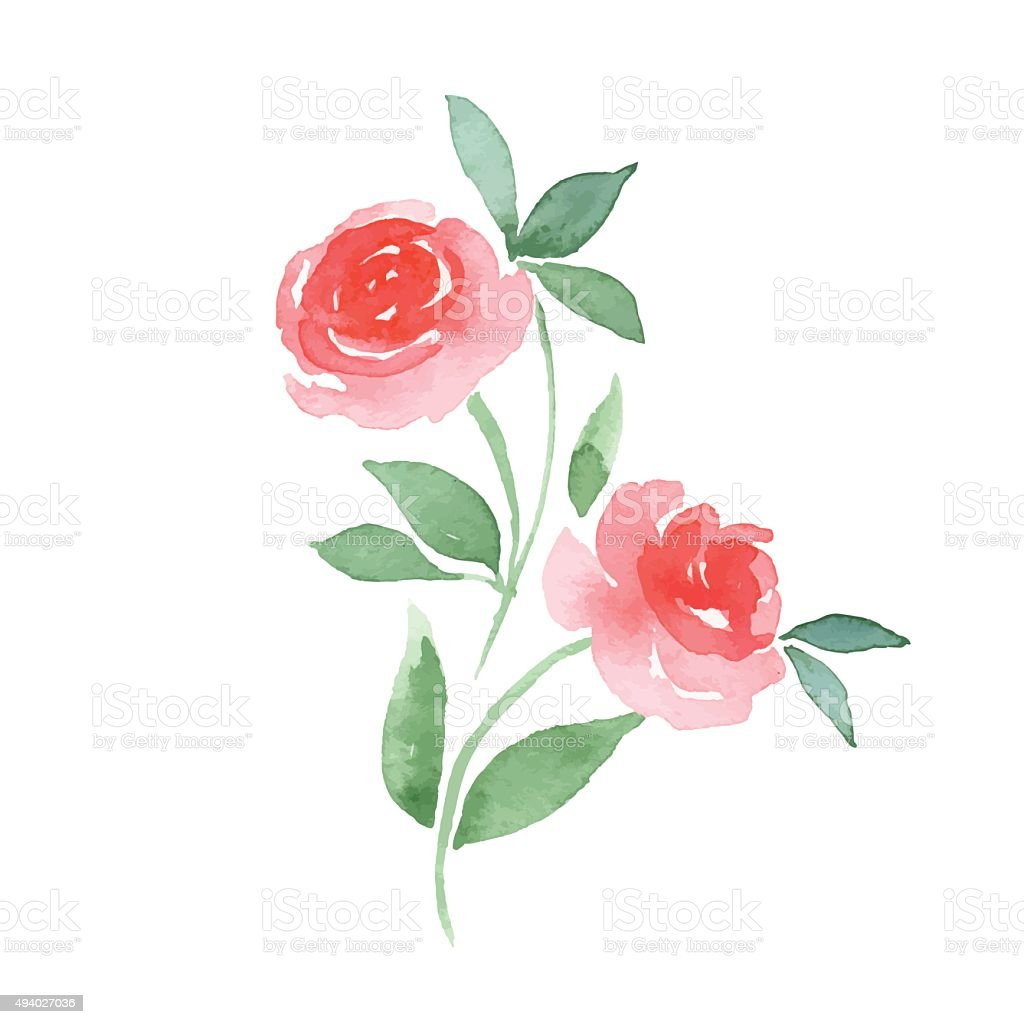 Branch of Roses. Vector vector art illustration