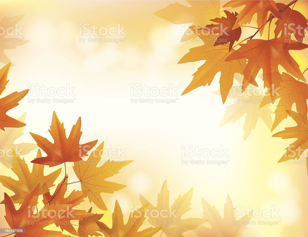 Branch of yellow maple royalty-free stock vector art