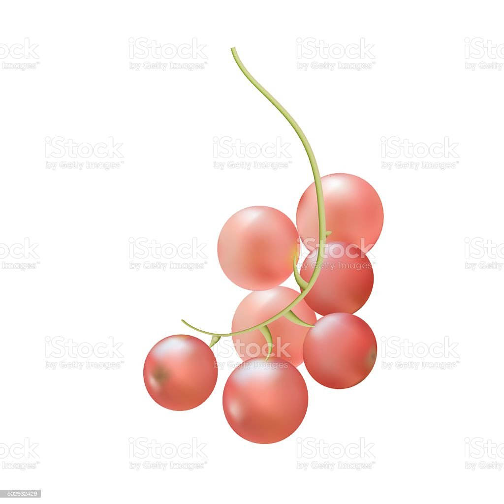 Branch ripe berries of pink currant royalty-free stock vector art