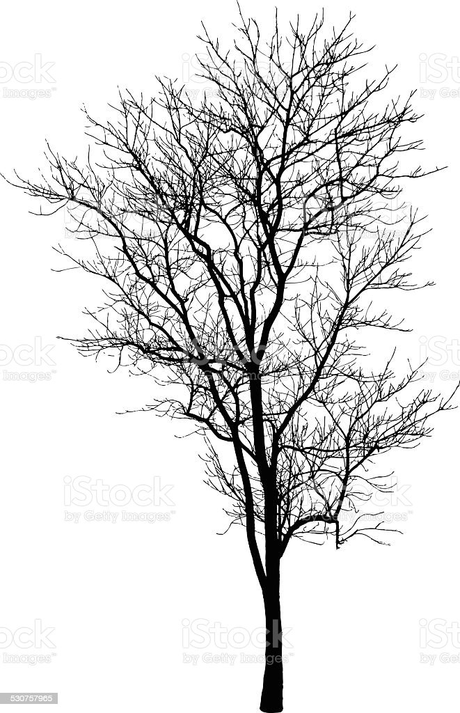 Branch Tree Silhouette vector art illustration